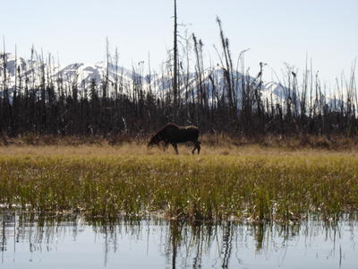 Elan (Alaska, USA, Amérique du Nord)