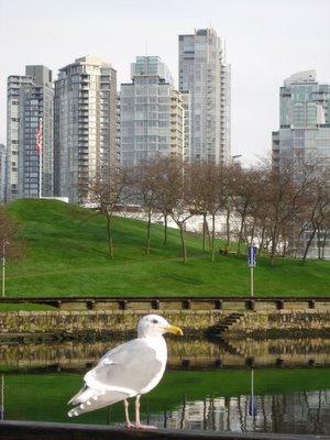 Une mouette à Vancouver en Colombie Britannique, Canada