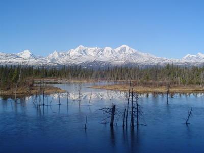 Denali Park (Alaska, USA, Amérique du Nord)