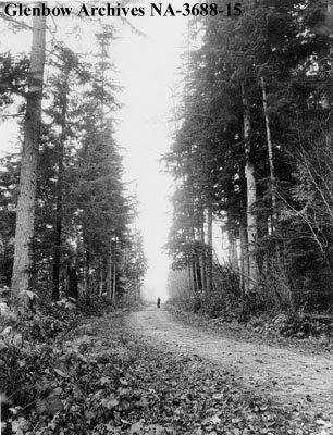 Une route à travers Stanley Park, Vancouver Canada