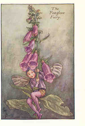 Fairy Flower: Foxglove
