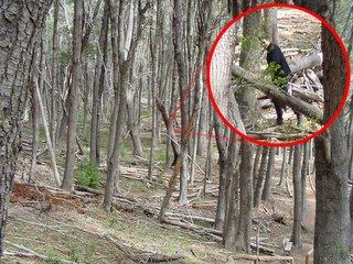 Foto del bosque de Traful, unica evidencia de pie oscuro
