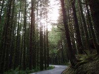 Road in northern temperate rainforest
