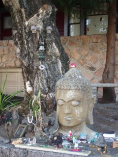 Buddha and the Tree Spirit, Hawthorne District, Portland OR (c) KR Silkenvoice