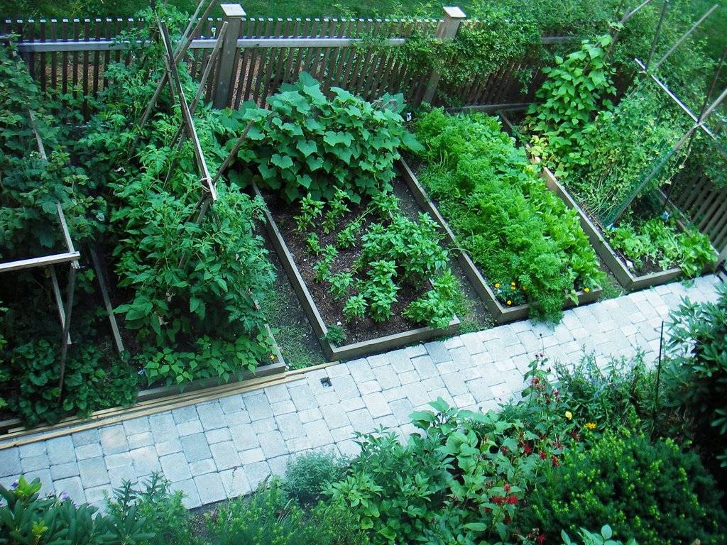 skippy u0027s vegetable garden july 2006