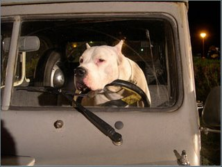 What the...? you want me to DRIVE this thing? Did anyone tell you I have no opposing thumbs?