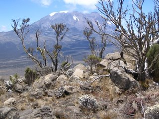 View of Kili from Shira
