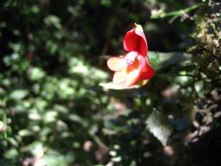 Flora on Kilimanjaro