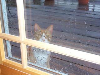 forlorn wet kitty