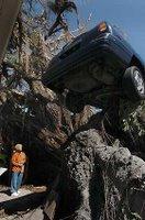 Look! Cars do grow on trees!