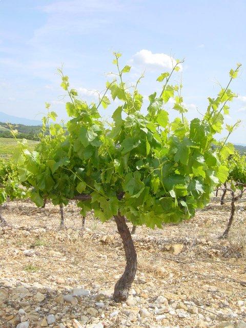 Le jardin des vignes de l 39 universit du vin route des vins - L univers du jardin les rues des vignes ...