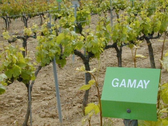 Le jardin des vignes de l 39 universit du vin le jardin des - L univers du jardin les rues des vignes ...