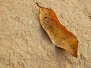 Leaf of the Earth