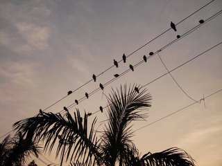 Delhi, 9 January 2006 7:40 AM