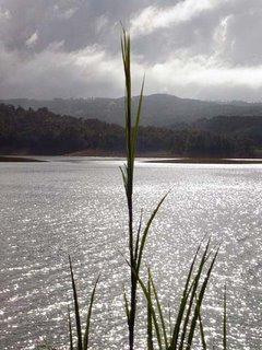 Lake Side Grass