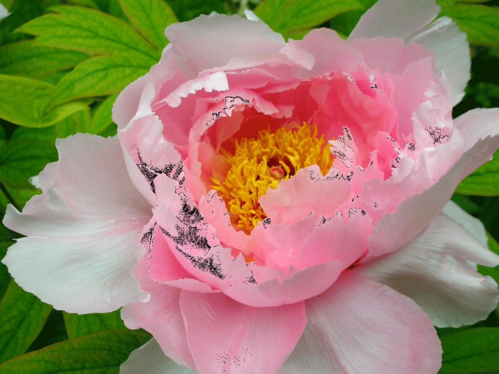 La cuoca giardiniera i tulli tulli tulipan - Bulbi estivi quando piantarli ...