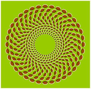 Acorn storm Illusion
