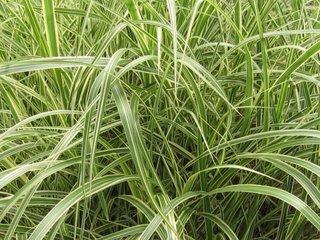 Most Common Herb Garden Plants