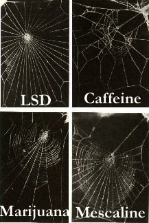 Webs of drugged spiders