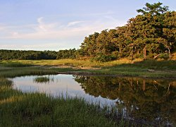 'Salt marsh at sunset / Wellfleet, Massachusetts' by Tom Whelan