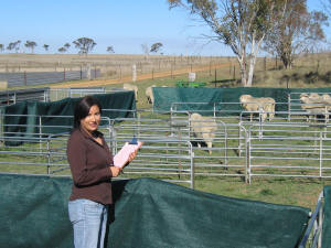 Researcher Caroline Lee with the sheep maze