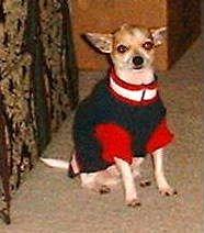 Bosco, my little dork