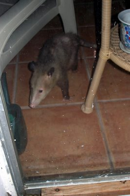possum hilton
