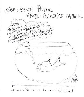 South Beach Patrol Spots Beached Whale