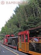torokkobambu