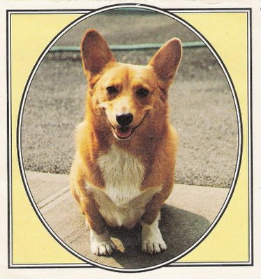 Corgi, Welsh Pembrook - very smart, good at herding, cute as the dickens