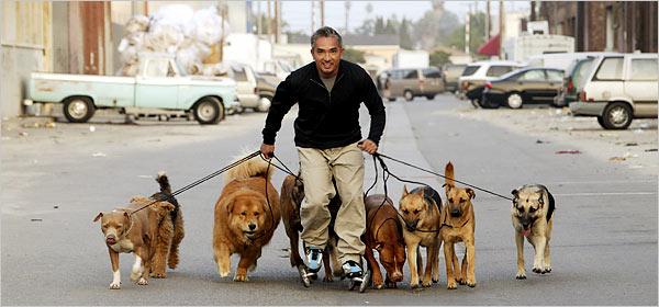 Cesar Millan Dog Walking Techniques