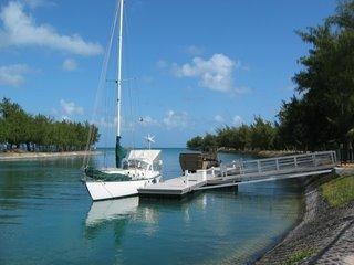 Velella in Saipan
