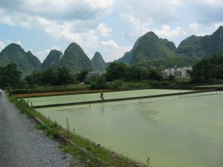 Rice Paddies and Peaks