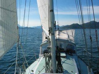 Velella Sailing in the Islands
