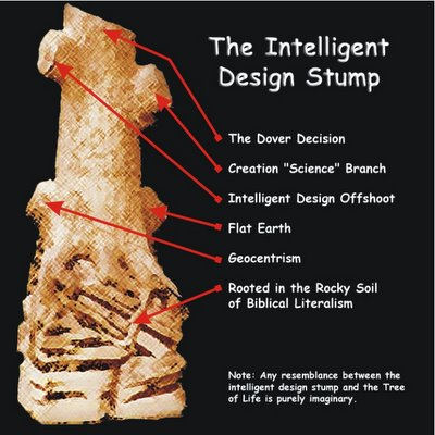 evolution intelligent design essay