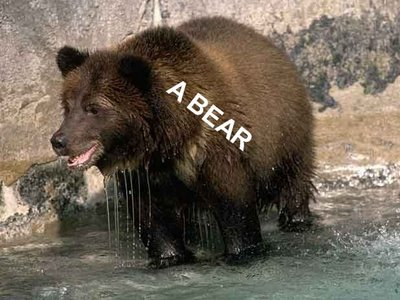 Bear.1