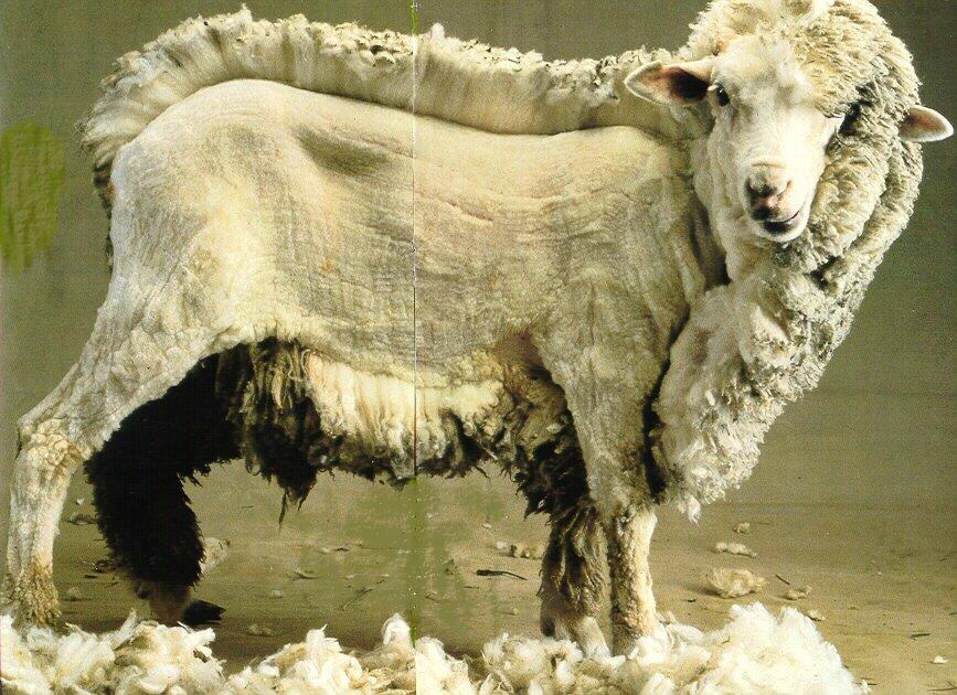 Tpe laine et coton - Avantage de la laine ...