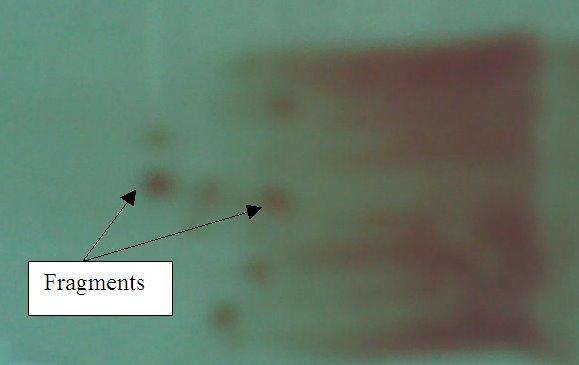 how to make bone marrow aspirate smears
