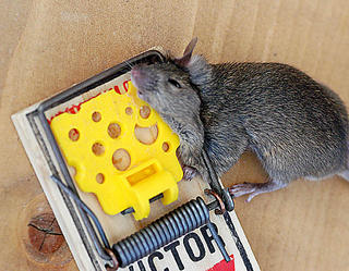 how to build a mousetrap car that goes far