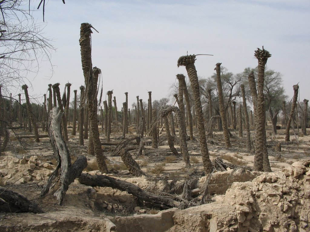 Image result for The dead dates trees