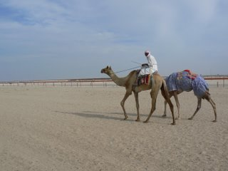 A rider and his camels
