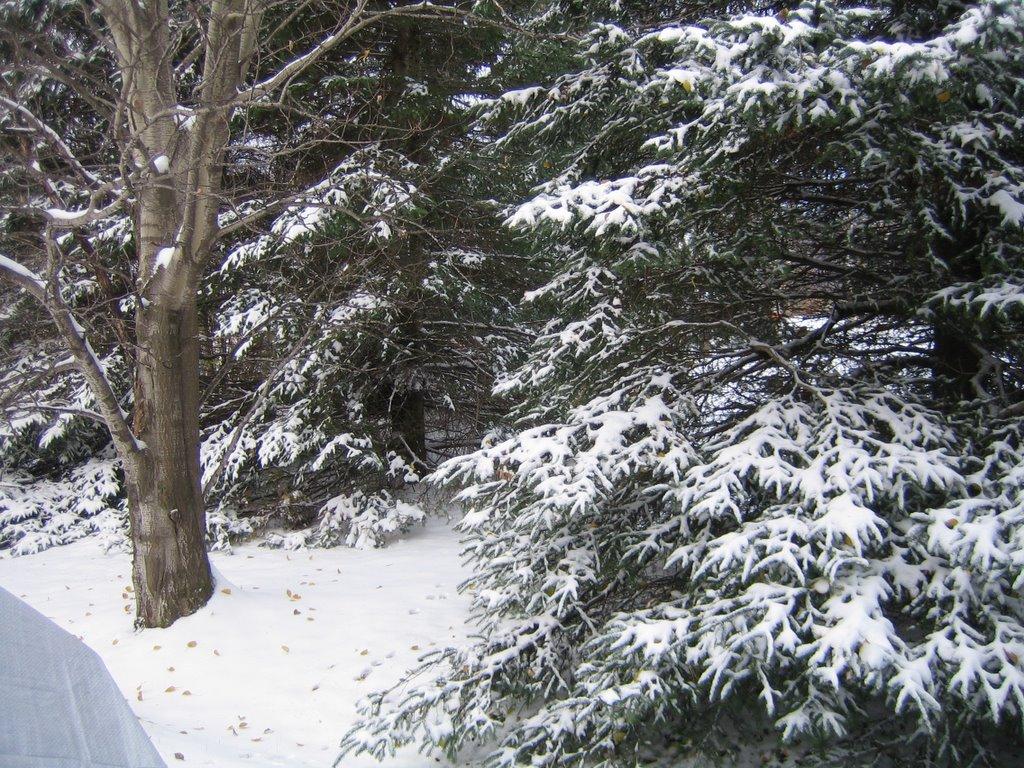 Gourmandises co une vrai bord e de neige - Vrai flocon de neige ...