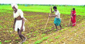 farmer suicides and agrarian distress 1 farmers' suicide in india: agrarian crisis, path of development and politics in karnataka muzaffar assadi professor of political science.