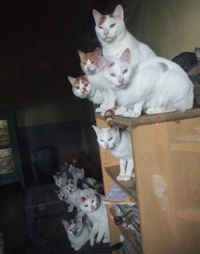 13 cats