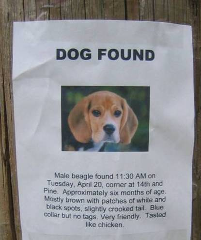 Beagle lost and found
