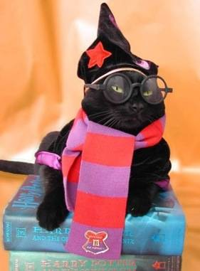 Fun Cat Fashion