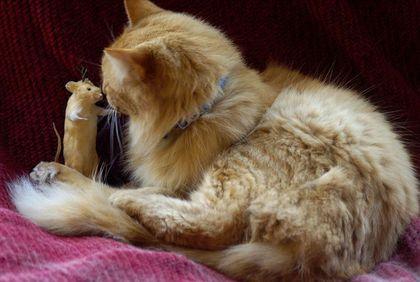 mousecat