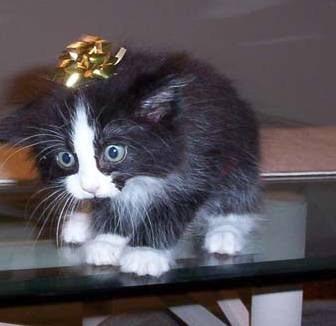 Gift Cat