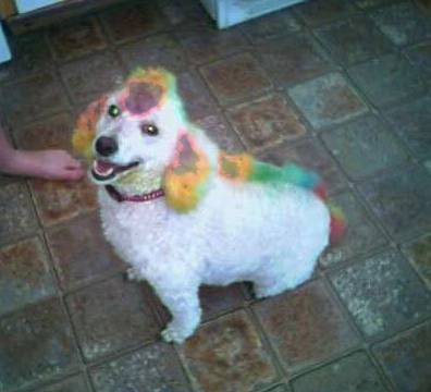 Clown Dog