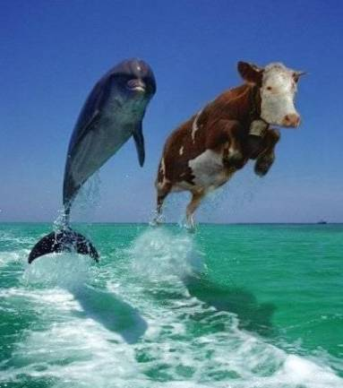 Funny Delphin and Cow